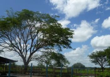 Deforestación vs. Beneficio de árboles y bosques para la humanidad