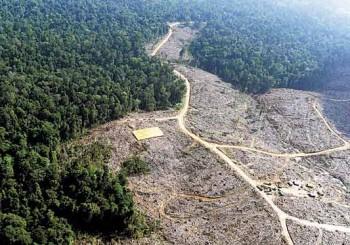 deforestacion-amazonas-colombia