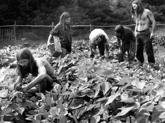 hippie ecology